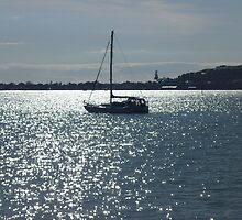 Auckland City Habour by chrissy mitchell