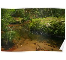 Stream with rock covered in moss & ferns Poster
