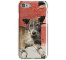 Stray Dog on a Street iPhone Case/Skin