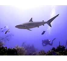 Swimming Shark Photographic Print