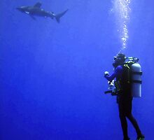 Watching the Oceanic Whitetip by SerenaB