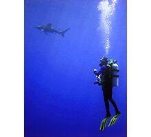 Watching the Oceanic Whitetip Photographic Print