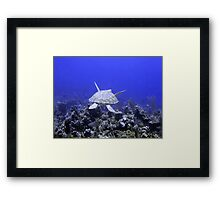 Green Turtle Swimming Framed Print