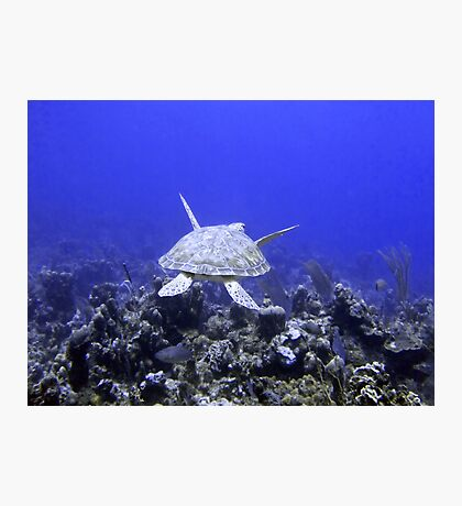 Green Turtle Swimming Photographic Print