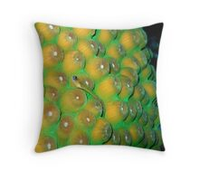 Small Wrasse on Hard Coral Throw Pillow