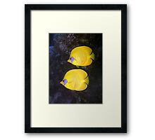 Pair of Yellow Butterflyfish Framed Print