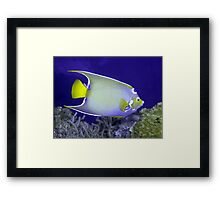 Queen Angelfish From Side Framed Print