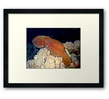 Octopus at Night Framed Print