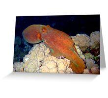 Octopus at Night Greeting Card