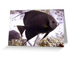 Black Angelfish From Side Greeting Card