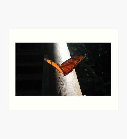 orange wings - iguazu falls Art Print
