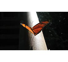 orange wings - iguazu falls Photographic Print