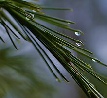 Rain Drops by Liz Worth