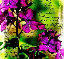Luminous Lunaria - Money Plant $ by MotherNature2