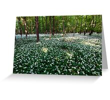 Ramsons Forest Greeting Card
