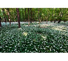 Ramsons Forest Photographic Print