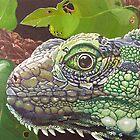Green Iguana by eric petrie