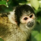 squirrel monkey by brett watson