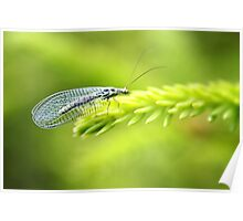 Lacewing Poster