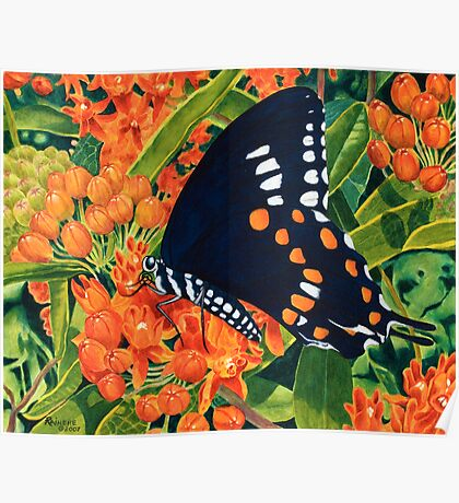 """""""Swallowtail on Butterfly Weed"""" - Wild Butterfly Weed Poster"""