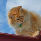 Sungah...A Home On The Roof Top. by Toni Kane