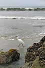 Going for a Walk on the Beach - San Diego California by Debbie Pinard