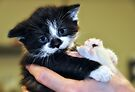 Do You See What I Have To Put Up With < says the kitten by Elaine  Manley