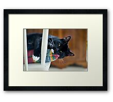 Camillo On My Chair Framed Print