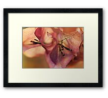 After the Frost Framed Print