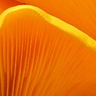 Golden Gills by Jean Gregory  Evans