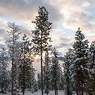 Early Winter Morning From the Deck by Bryan D. Spellman