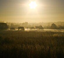 Mist  by David  Preston