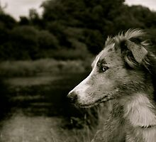 Lurcher On The Derwents Banks. by Lou Wilson