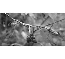 Random Branch Photographic Print