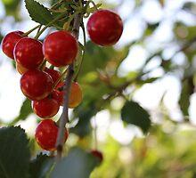 cherry by Anna Kaijankoski