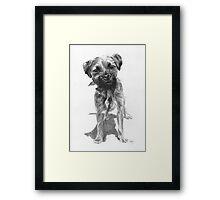 Alfie  Border Terrier Framed Print