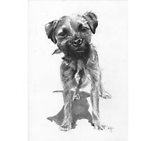 Alfie  Border Terrier Photographic Print