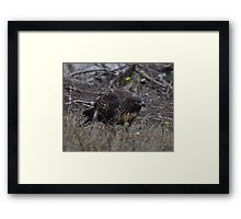 Land's End Golden Eagle Framed Print