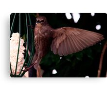 Bird On A WING Canvas Print