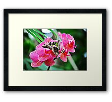 Pink Orchids & Butterfly Framed Print
