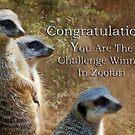 Zoofari Banner Meerkats by Eve Parry