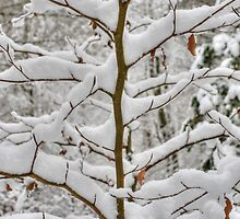 Tree branches covered in snow by StefanFierros