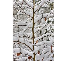 Tree branches covered in snow Photographic Print