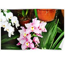 Orchid Sweetness Poster