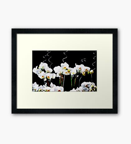 Blooming White Orchids Framed Print