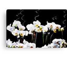Blooming White Orchids Canvas Print