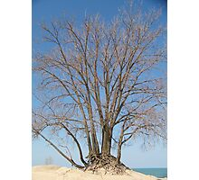 Roots - Warren Dunes, Lake Michigan Photographic Print