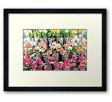 Colorful  Orchids Framed Print