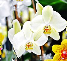 Decorative White & Orchids by exoticflowing