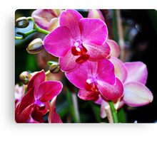 Blooming Pink Orchids Canvas Print